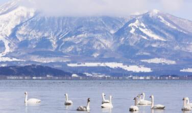 会津・猪苗代湖の白鳥と蔵王の樹氷【3日間】