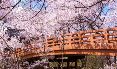 2つの名城と桜の町「高遠」 上信越 桜街道【3日間】