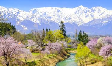 樅の木ホテルに3連泊 安曇野から白馬へ 北アルプス山麓 春風景の旅【4日間】