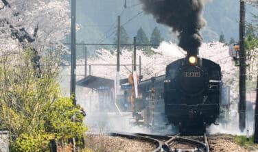 大井川鉄道SL列車と富士山麓の桜の旅【4日間】