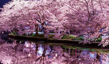 弘前の桜と角館 春の旅 【3日間】
