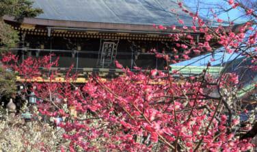 ちょっと贅沢な京都滞在 如月二月 京の歳時記【5日間】