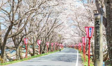 久世(くぜ)トンネル桜と新庄がいせん桜 出雲街道・春景色の旅【4日間】