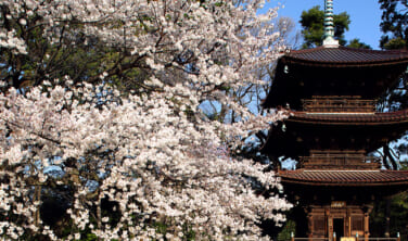 椿山荘の雲海と桜の絶景の旅【2日間】