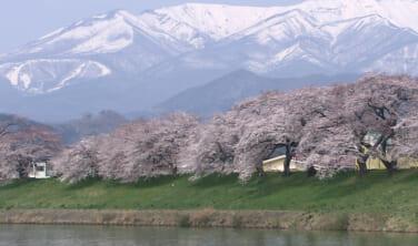 置賜(おきたま)さくら回廊と南東北 春景色の旅【3日間】