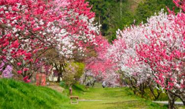 春の伊那谷(いなだに) 天空の村と絶景の旅【3日間】