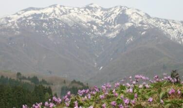 越後ふたつの城下町と春爛漫の風物詩【3日間】