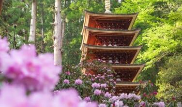 花の大和路と12年ぶりの薬師寺東塔の旅【4日間】