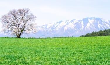 春景色 三陸の大絶景と盛岡、平泉 花の旅【4日間】