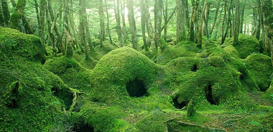 八ヶ岳高原音楽堂「小野リサ サマーライブ2021」と神秘の「苔の森」 【3日間】
