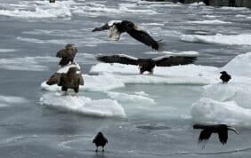 羅臼流氷クルーズも楽しむ 冬の道東大自然の旅