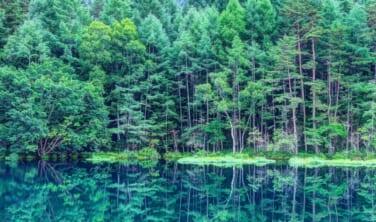 白馬 2つの高山植物園と蓼科・東山魁夷の風景【4日間】