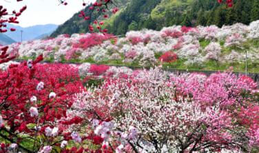 アルプスの桃源郷 阿智村と絶景千畳敷【3日間】