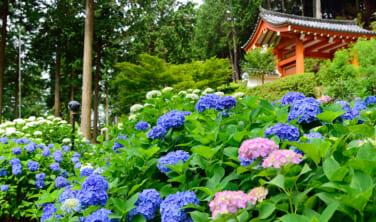 京都再訪と大津滞在の旅【6日間】