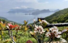 東京発 鹿児島の秘島 甑島周遊の旅