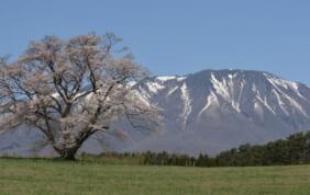 春景色 三陸の大絶景と<br>盛岡、平泉 花の旅