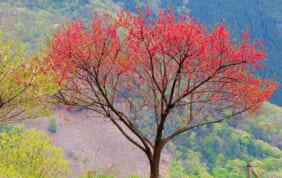 日本のチロル 下栗の里 (長野県)