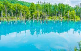 青の池 (北海道・美瑛町白金)