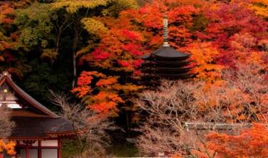 紅葉の大和路と奈良のまち歩き【5日間】