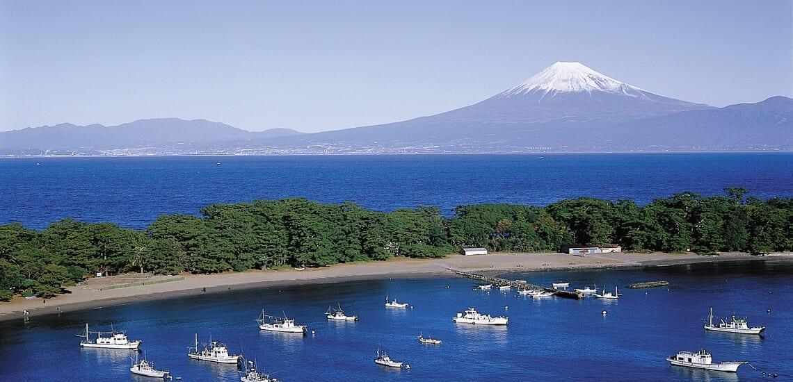 【福岡発着】 富士の絶景と海の幸 西伊豆と駿河湾【4日間】