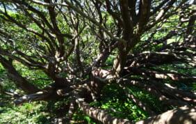 野鳥の楽園・天売島と焼尻島の旅