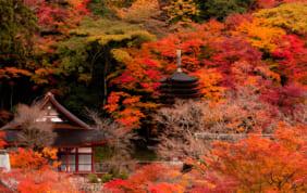 ワールドの奈良のホテル「MIROKU」 紅葉に華やぐ奈良で過ごす第3弾・11月の旅を発表!