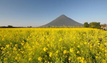 ひと足早い日本の春景色を楽しむ旅